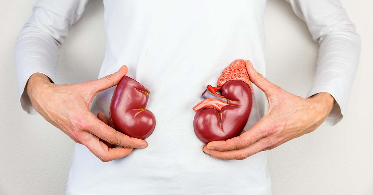 Woman holding model kidney halves at body